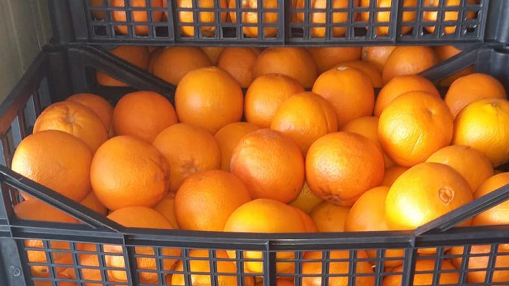 naranjas.lesbos